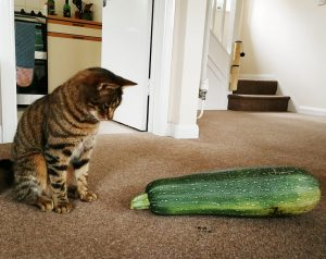 Cat looking surprised at a marrow